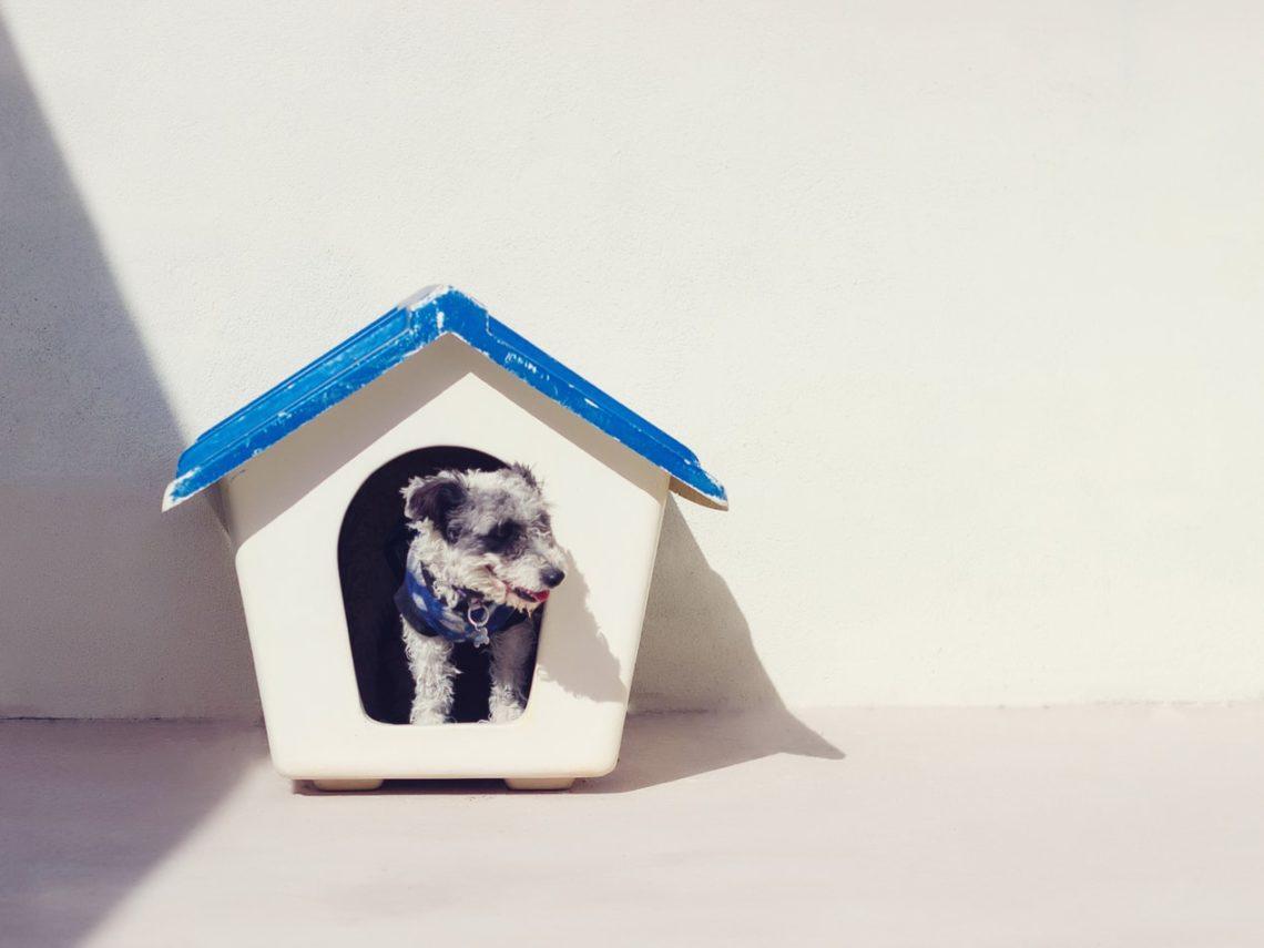 huisdier in huis
